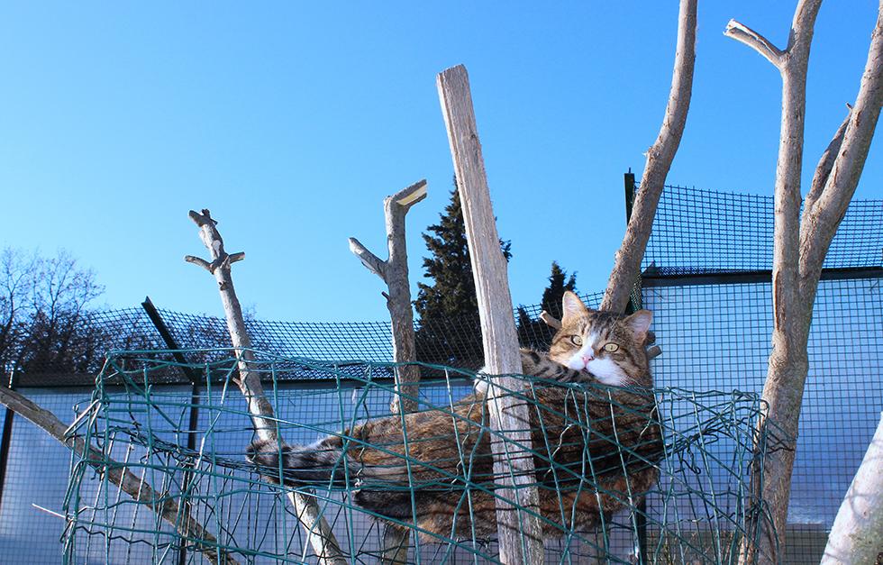 Gatta su albero copia gattile a m a - Gattile bagno a ripoli firenze ...