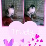 trudy1