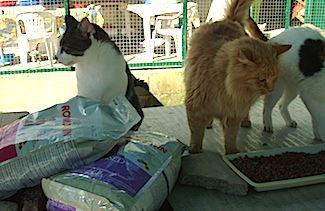 Un grosso mao grazie a gattile a m a - Gattile bagno a ripoli firenze ...