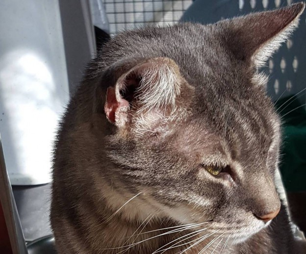 Gatti abbandonati per ferie salvati in un appartamento felini