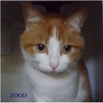 zood