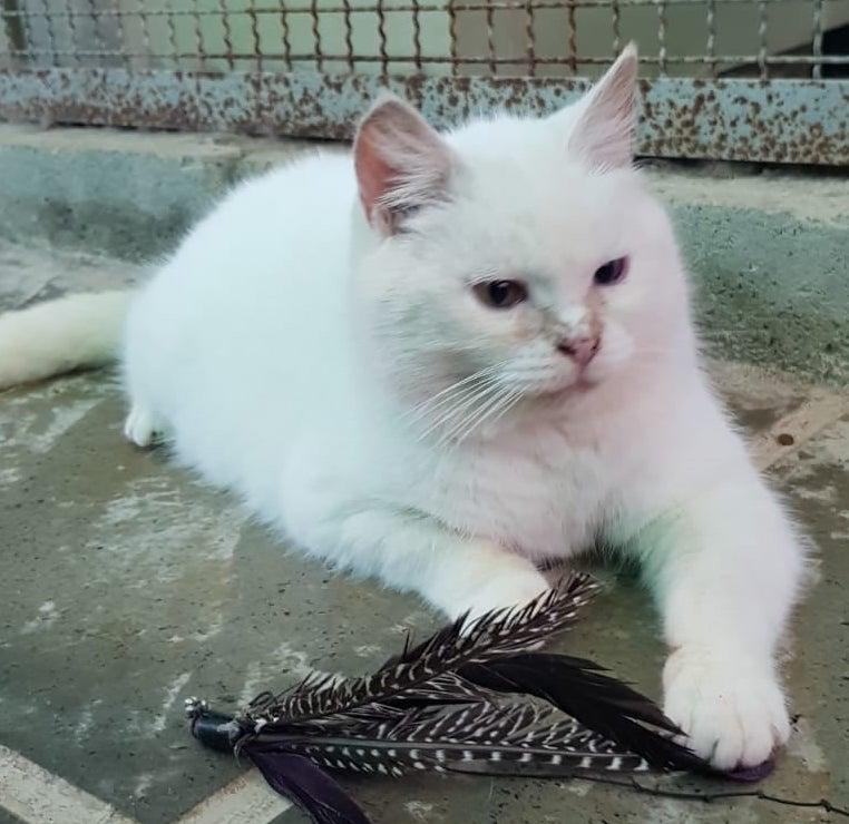 zea-gattile-ama